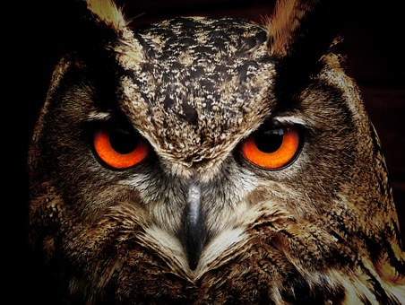 Research shows that night owls have more health problems than people who go to bed earlier – even if they get the same amount of sleep!